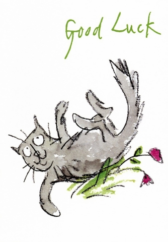 Cat Rolling Around
