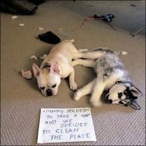 Helpful hounds