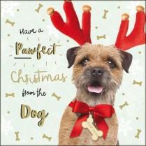 Yappy Christmas!