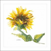 Sunflower softness