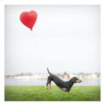 Dachshund and balloon