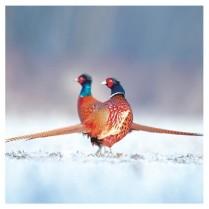 Christmas pheasants