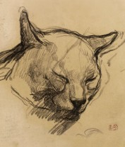 Study of a cat's head