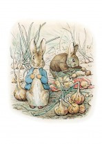 Peter Rabbit among the turnips