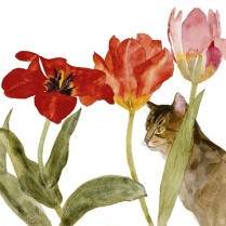 Cat Amongst Tulips