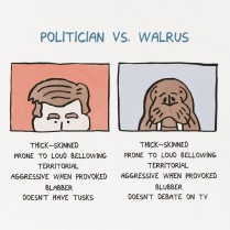 Politician v Walrus