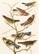 Group of finches